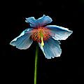 Blue Beauty by Richard Ortolano