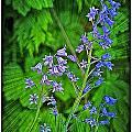Blue Bells by Dawn Harris