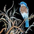 Blue Bird by Bobbylee Farrier