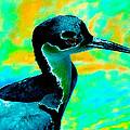 Blue Bird by David Lee Thompson