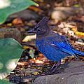 Blue Bird by Jake Johnson