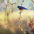 Blue Bird by Todd Hostetter