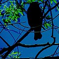Blue-black-bird by Todd Sherlock
