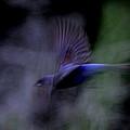 Blue Blur by Travis Truelove