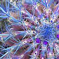 Blue Cactus by Rebecca Margraf