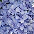 Blue Cluster by Rani De Leeuw