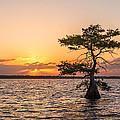 Blue Cypress Lake Sunrise by Claudia Domenig