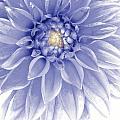 Blue Dahlia by Al Hurley