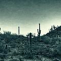 Blue Desert  by Saija  Lehtonen