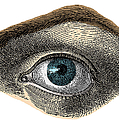 Blue Eye by Science Source