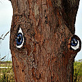 Blue Eyed Pine by David Lee Thompson