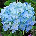 Blue Garden Flower by Tap On Photo