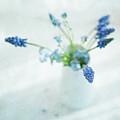 Blue Flowers In White Jug by Jill Ferry