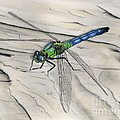 Blue-green Dragonfly by Christian Conner