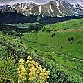 Blue Grouse Pass, Willmore Wilderness by Darwin Wiggett
