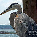 Blue Heron 2 by Susan Cliett