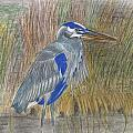 Blue Heron by Don  Gallacher