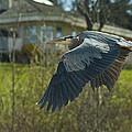Blue Heron by Greg Horler