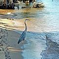 Blue Heron On The Beach by Michael Thomas