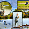 Blue Heron Pose by Shirley Tinkham