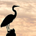 Blue Heron Silhouette by Rudy Umans