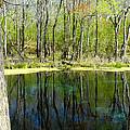 Blue Hole Springs Florida by David Lee Thompson