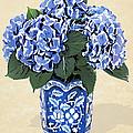 Blue Hydrangeas In A Pot On Parchment Paper by Elaine Plesser
