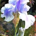 Blue Iris by Elaine Plesser