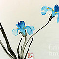 blue iris II by Yolanda Koh