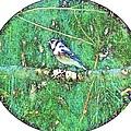 Blue Jay 8 by Dave Dresser