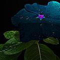 Blue Jean Impatient by Debbie Portwood