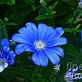 Blue Magic by Byron Varvarigos