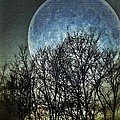 Blue Moon by Marianna Mills