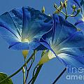 Blue Morning by Jim And Emily Bush