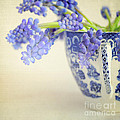 Blue Muscari Flowers In Blue And White China Cup by Lyn Randle