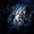 Blue Night by Kevin Bone
