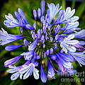 Blue On Blue by Karen Wiles
