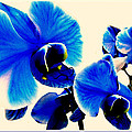 Blue Orchids Trio by Danielle  Parent