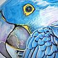Blue Parrot by Ken Huber