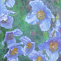 Blue Poppies by Richard James Digance