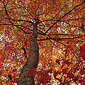 Blue Ridge Autumn Leaves 1.3 by Bruce Gourley