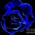 Blue Rose by Bernard MICHEL