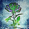 Blue Rose by Leslie Revels