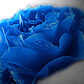 Blue Rose With Drops by Debbie Portwood