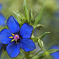 Blue Royalty by Beverly Hanson