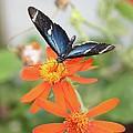 Blue Sara On Orange Sunflower by Andrea  OConnell