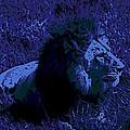 Blue Simba by George Pedro