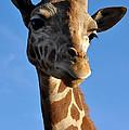 Blue Sky Giraffe by Anjanette Douglas