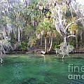 Blue Spring State Park Florida by Gwen C