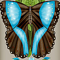 Blue Tiled Butterfly by Anne Norskog
